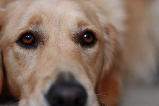 kell szeretni a kutyák társkereső oldal véleményeket