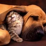 Létezik barátság kutya és macska között!
