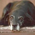 Egy öregebb kutya is képes meglepni a gazdit!